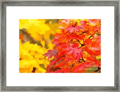 Autumn Is Beautiful Framed Print