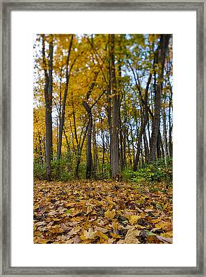 Autumn Is Here Framed Print by Sebastian Musial