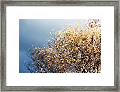 Framed Print featuring the photograph Autumn Is Leaving by Gwyn Newcombe