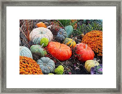 Autumn Joy Framed Print by Becky Lodes