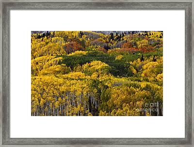 Autumn Kaleidoscope Framed Print