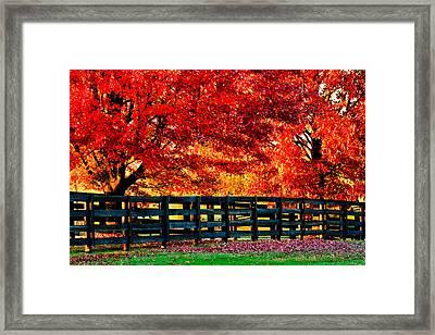 Autumn Kentucky Maples Framed Print