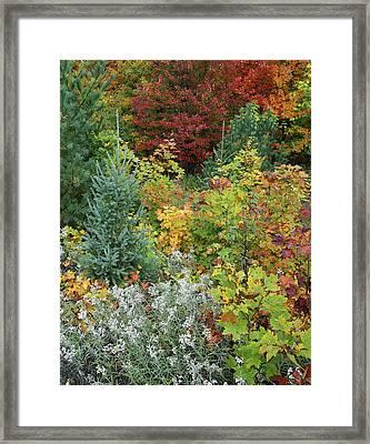 Autumn Killarney Provincial Park Framed Print by Tim Fitzharris