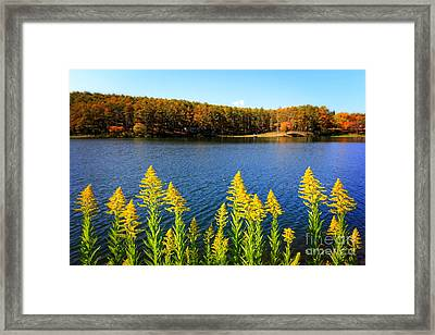 Autumn Lake With Canada Goldenrod Framed Print by Beverly Claire Kaiya