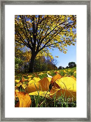 Autumn Landscape Framed Print by Elena Elisseeva