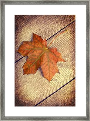 Autumn Leaf Framed Print by Amanda Elwell