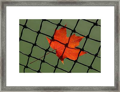 Autumn Leaf In Net Framed Print
