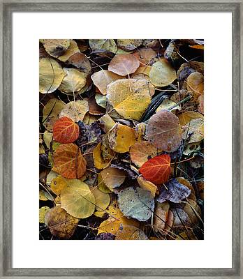 Autumn Leaf Puzzle Framed Print