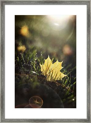 Autumn Leaf Sunset Framed Print by Scott Norris