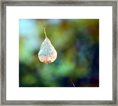 Framed Print featuring the photograph Autumn Leaf Suspended by Linda Cox