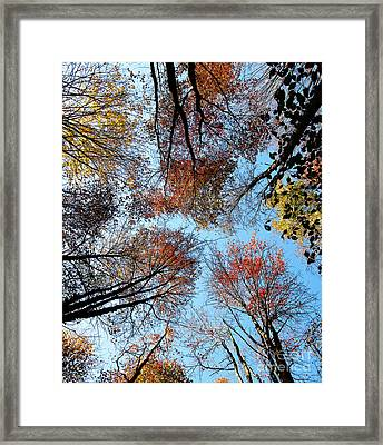 Autumn Leaves 2011 Season Framed Print by Tina M Wenger