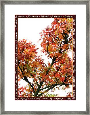 Autumn Leaves 3 Framed Print