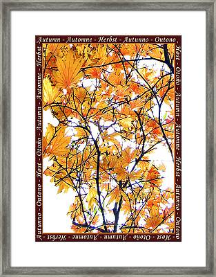 Autumn Leaves 4 Framed Print