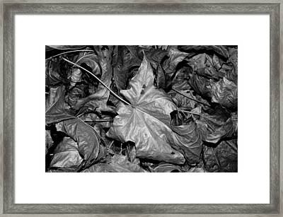 Framed Print featuring the photograph Autumn Leaves by Art Shimamura