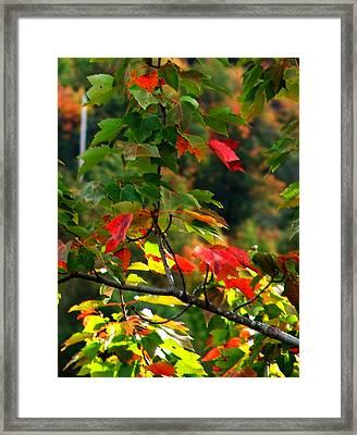 Autumn Leaves At St. Ann's Bay Framed Print by Janet Ashworth