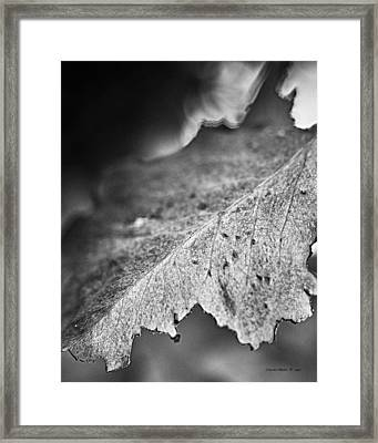 Autumn Leaves B And W Framed Print