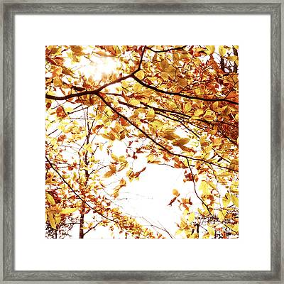 Autumn Leaves Framed Print by Blink Images
