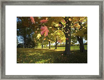 Autumn Leaves Blowing In The Breeze In Framed Print by Richard Desmarais