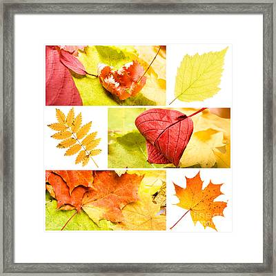 Autumn Leaves Framed Print by Boon Mee