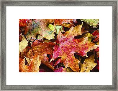 Autumn Leaves Framed Print by Christi Kraft