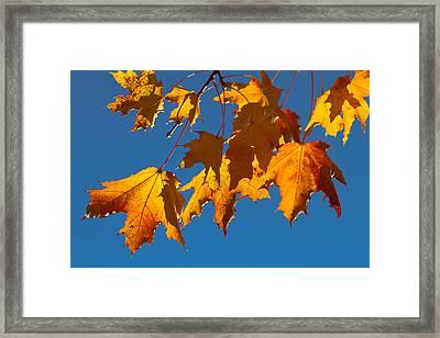 Autumn Leaves Framed Print by Dennis Bucklin