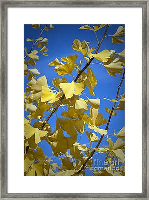 Autumn Leaves Framed Print by Design Windmill