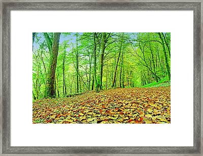 Autumn Leaves Framed Print by Frank Anthony Lynott