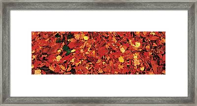 Autumn Leaves Great Smoky Mountains Framed Print by Panoramic Images