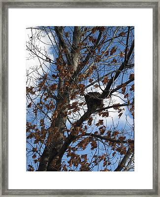 Autumn Leaves Framed Print by Guy Ricketts