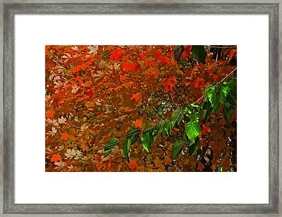 Autumn Leaves In Red And Green Framed Print