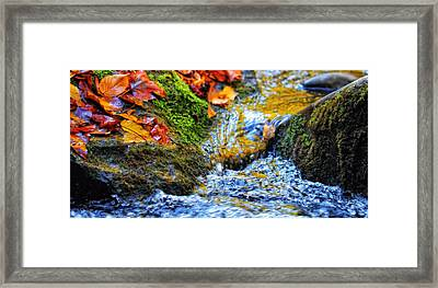 Autumn Leaves In Water Framed Print