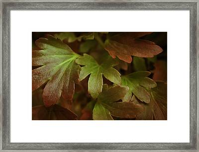 Autumn Leaves Framed Print by Jean OKeeffe Macro Abundance Art