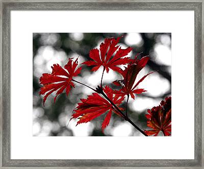 Framed Print featuring the photograph Autumn Leaves by JianGang Wang