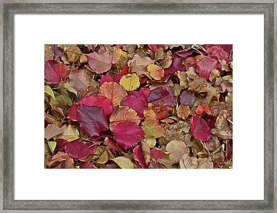 Framed Print featuring the photograph Autumn Leaves by John Babis