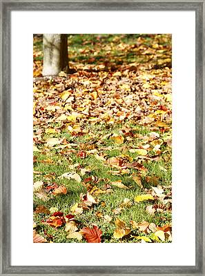 Autumn Leaves Framed Print by Les Cunliffe