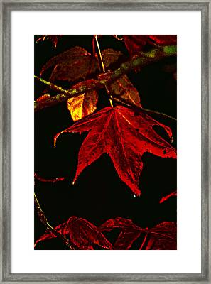 Framed Print featuring the photograph Autumn Leaves by Lesa Fine