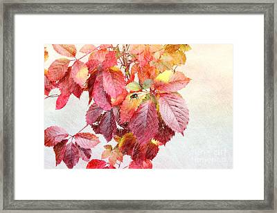 Autumn Leaves Framed Print by Liane Wright