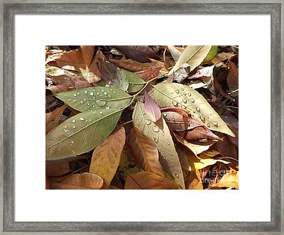 Autumn Leaves Framed Print by  Marcus Maiden