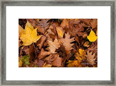Framed Print featuring the photograph Autumn Leaves by Matt Malloy