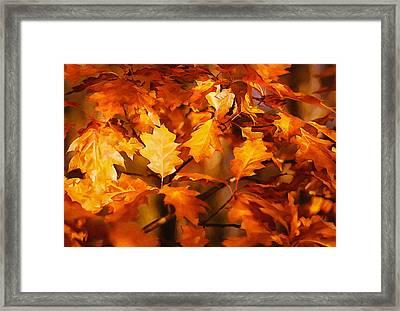 Autumn Leaves Oil Framed Print by Steve Harrington