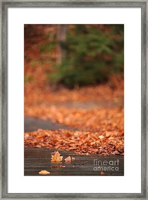 Autumn Leaves On A Bridge Framed Print