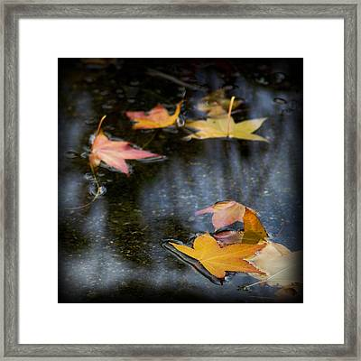 Autumn Leaves On Water Framed Print by Yulia Kazansky