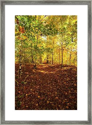 Autumn Leaves Pathway  Framed Print