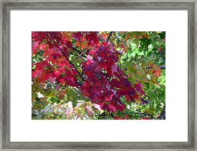 Autumn Leaves Reflections Framed Print