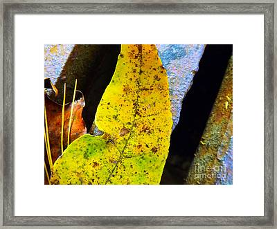 Autumn Leaves Framed Print by Robyn King
