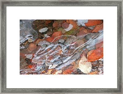 Autumn Leaves Under Ice Framed Print by Carolyn Reinhart