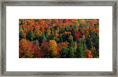 Autumn Leaves Vermont Usa Framed Print by Panoramic Images
