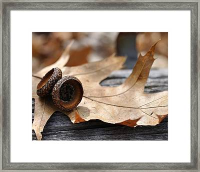 Autumn Leaves With Acorn Caps 001 Framed Print