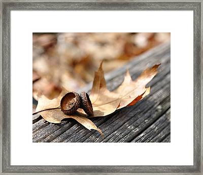 Autumn Leaves With Acorn Caps 002 Framed Print
