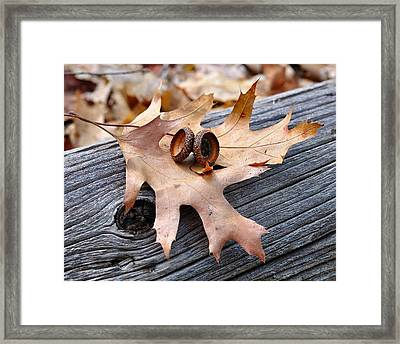 Autumn Leaves With Acorn Caps 003 Framed Print